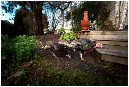 Outdoor deck & private garden. The turkeys are no longer in residence